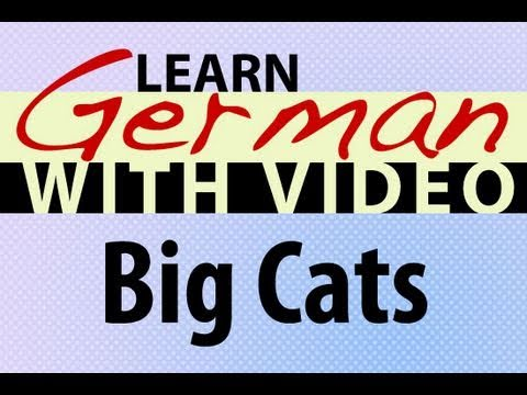 Learn German with Video – Big Cats