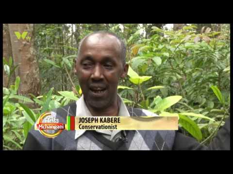 Hela Mchangani: Indigenous Trees