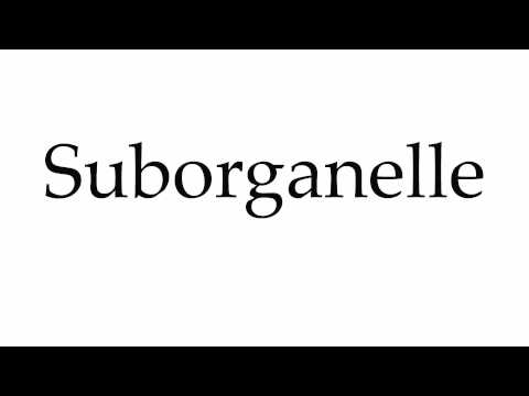 How to Pronounce Suborganelle