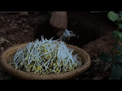 Japanese bean sprouts