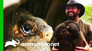 The Greatest Galapagos Discovery In Over 100 Years! | Extinct or Alive? by Animal Planet