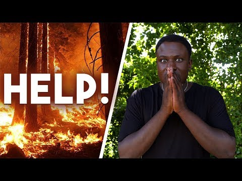 Why they're Burning Down the Amazon Rainforest into Pieces
