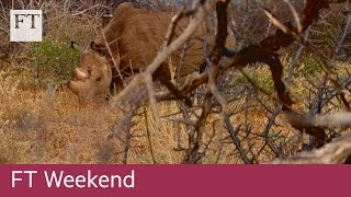 Subscribe to FT.com here: http://on.ft.com/2eZZoLI ▻ Watch 'Walking with black rhinos in Kenya' and more on FT.com:...
