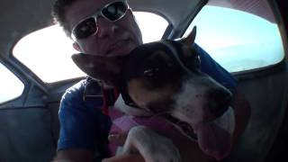 Crasha - The Skydiving Dog - Swoopware: Skydive