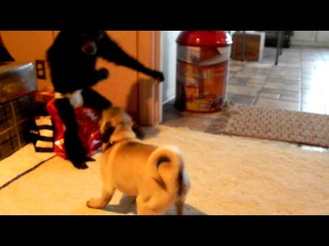 Puppy VS Monkey