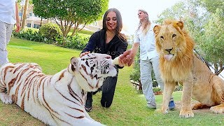 Video Visiting the Royal Family of Dubai !!! MP3, 3GP, MP4, WEBM, AVI, FLV Agustus 2019