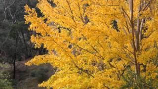 Video Reason Piano - Ost. Autumn in my heart MP3, 3GP, MP4, WEBM, AVI, FLV Februari 2018