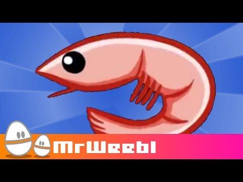 Shrimp Glockenspiel