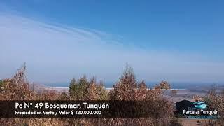 Pc49 bosquemar de Tunquén