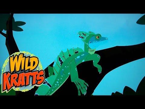 Wild Kratts PBS - Flight of the Draco - Wild Kratts 2018 Full Episodes 4