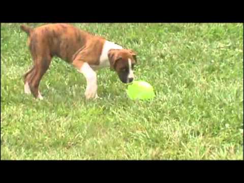 A video of Buster outdoors