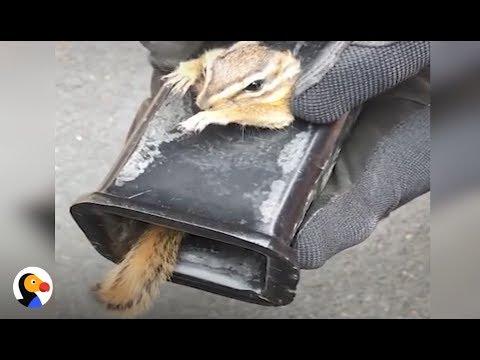 Ratowanie zakleszczonej wiewiórki