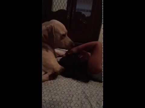 The Love between a dog and a little girl