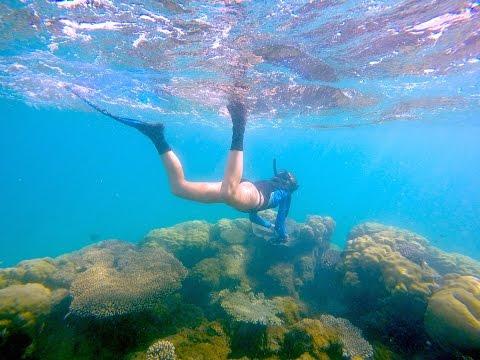 Plongée Ningaloo Reef, Australie