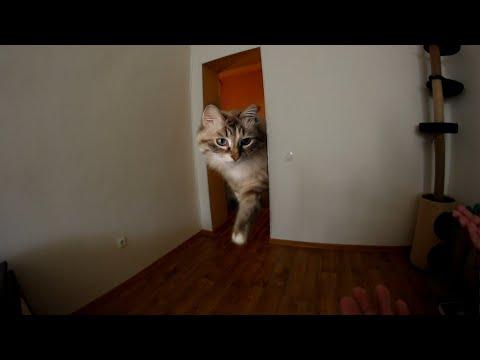 Гигантская кошка в моей квартире