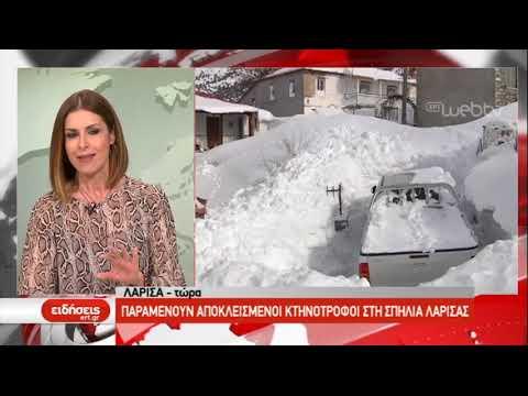 Αποκλεισμένοι κτηνοτρόφοι στη Θεσσαλία | 7/1/2019 | ΕΡΤ