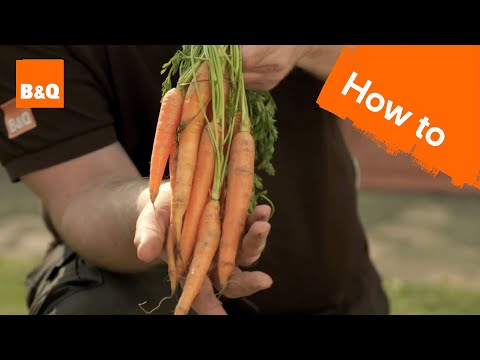 how to grow carrots from other carrots