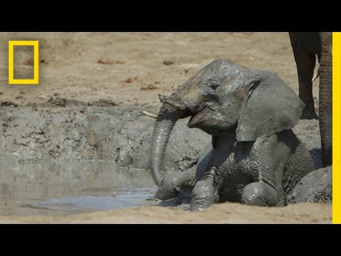 Orphaned Baby Elephants  You Can  t Help But Fall In Love