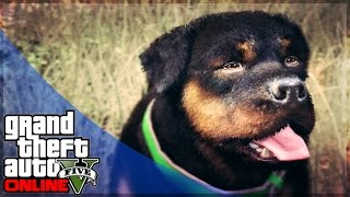 GTA 5 Online Pets And Animals In GTA Online!? Do You Want A PET? (GTA 5 Gameplay)