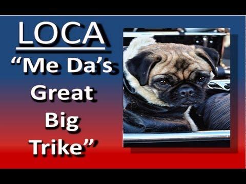 "Loca the pug sings again…………….""Me Da's great big trike"""