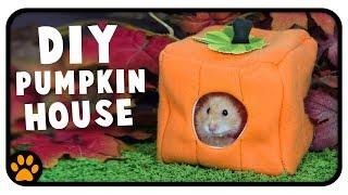 Let's Make A Pumpkin Hamster House! 🐹🎃 by ErinsAnimals
