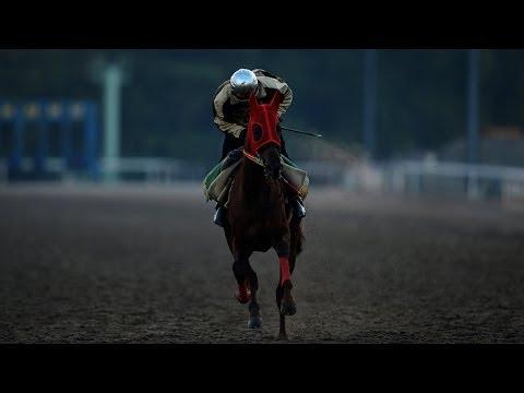 (9)競走馬の調教 尼崎市