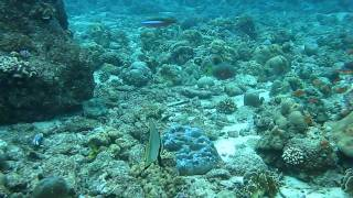 Simeulue Island Indonesia  City new picture : Simeulue Island, Sumatra Coral Reef
