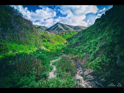 Calla Lily Valley: Hidden Gem in California