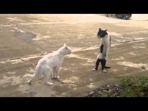scene esilaranti di gatti impazziti