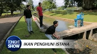 Download Video Vincent Takjub Lihat Ikan Ternak Presiden Jokowi MP3 3GP MP4