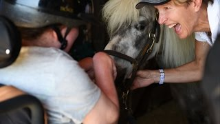 High Hopes offers equine experience to Camp Harkness campers