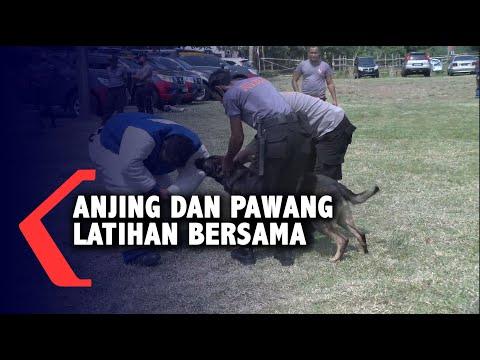Tingkatkan Kemampuan, Pawang dan Anjing Latihan Bersama