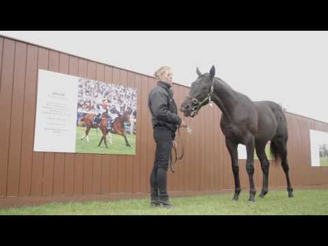 Tattersalls October Yearling Sale Book 1 Day 3 Preview
