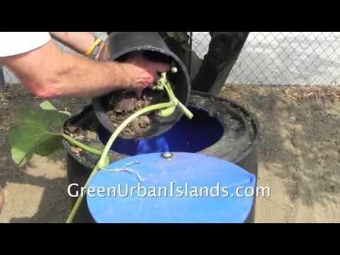 No cost trash barrel compost / garden growth accelerator — soil, vermiculture, vines, squash