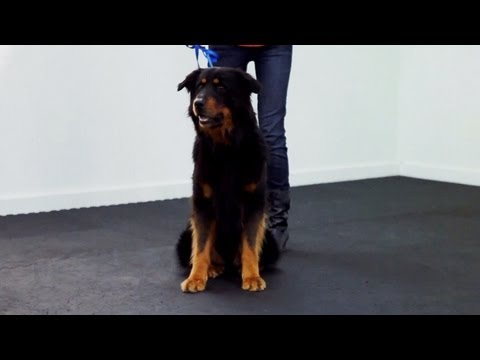 dog training - Follow eHow Pets for regular tips from Victoria Stilwell and more: http://www.youtube.com/subscription_center?add_user=ehowpets Learn more training commands ...
