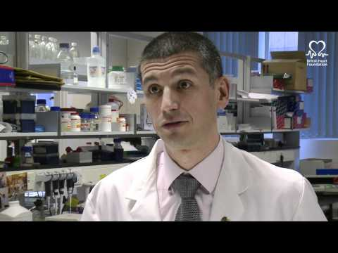 The science of the zebrafish - British Heart Foundation