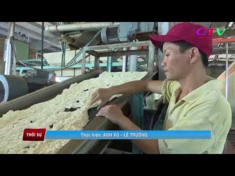 Liên kết thu mua mủ cao su tại vùng Cùa