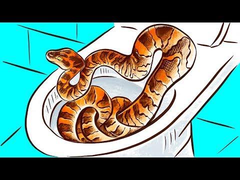 As Cobras Podem Mesmo Entrar Pelo Encanamento Do Vaso Sanitário?