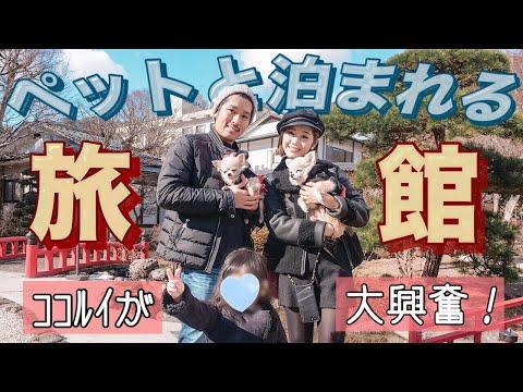 【Vlog】わんちゃんに親切すぎる旅館♡栃木県 鬼怒川~絆~