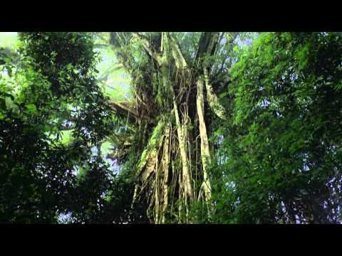 Laura's Paradise (видео)