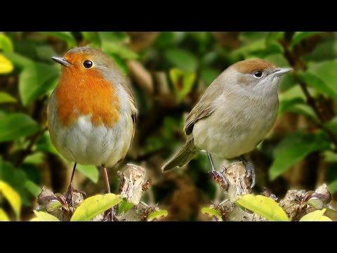 Birds of Note