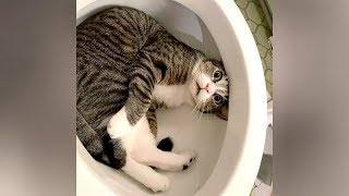 Video I SWEAR you will CRY WITH LAUGHTER! - Ultra FUNNY PETS & ANIMALS MP3, 3GP, MP4, WEBM, AVI, FLV Maret 2019