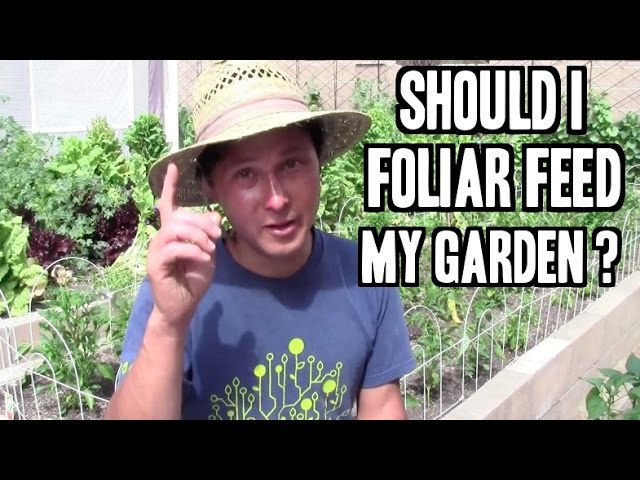 Should I Foliar Feed My Plants And More Organic Gardening Q A