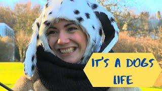 It's a Dogs Life TV Comedy Pilot - Visual Anarchy Production - Edinburgh Napier University TV Pilot