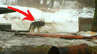 Dog Is Chained Outside For 15 Years Until A Freak Accident Changes His Entire Life by Did You Know Animals?
