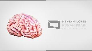Human Brain - ZBrush Timelapse