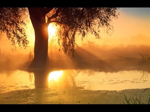 8 Hour Sleep Music Delta Waves: Music To Help You Sleep, Deep Sleep, Beat Insomnia ☯169