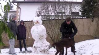 Video Sněží