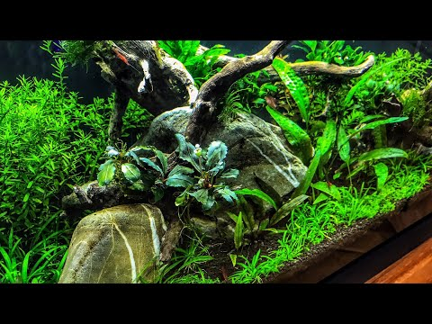 Budget Non CO2 Aquascape   BBA DEFEATED!