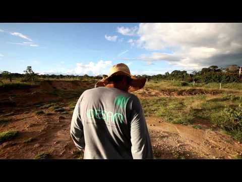 Semeando Sustentabilidade em Apuí - Reflorestamento